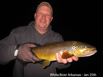 Brown_Trout_Mouse